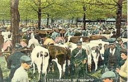 Vrijwilliger gezocht voor onderzoek Friese veehandel en veemarkten